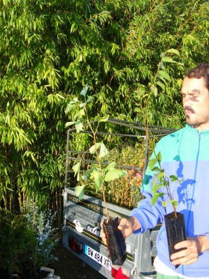 2014_0925plants0002