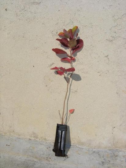 2014_0925plants0003