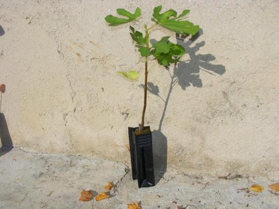 2014_0925plants0004